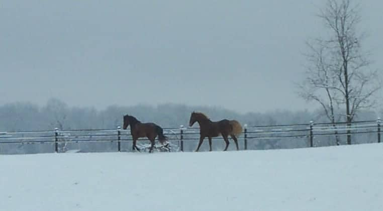 Winter feeding for the senior equine