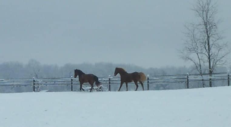 Winter feeding for the senior equine