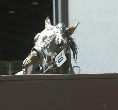 Five Most Common Myths about Bathing Horses