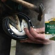 Hoof with Farrier
