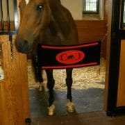 Jen's Horse