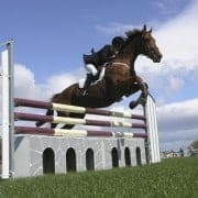 You only want the best for your horse, naturally.