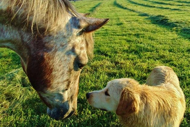 Probiotics for Dogs and Horses – New Evidence