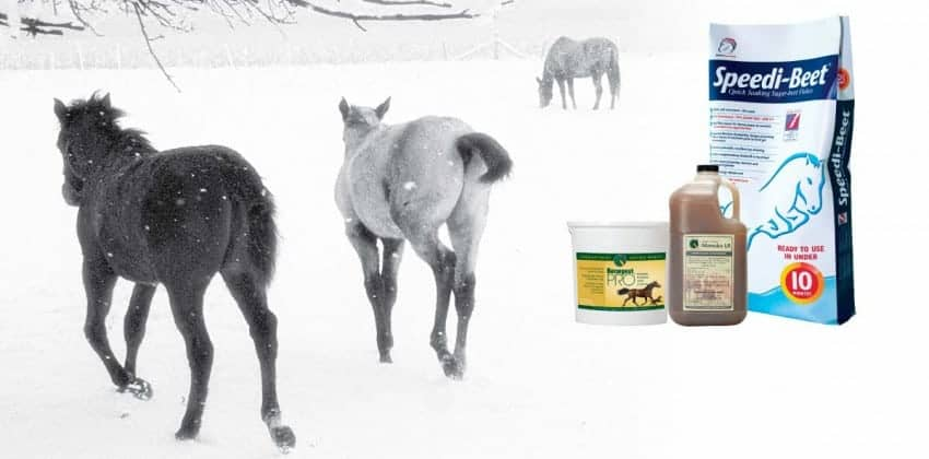 Healthy Gut, Happy Horse – Winter Digestion