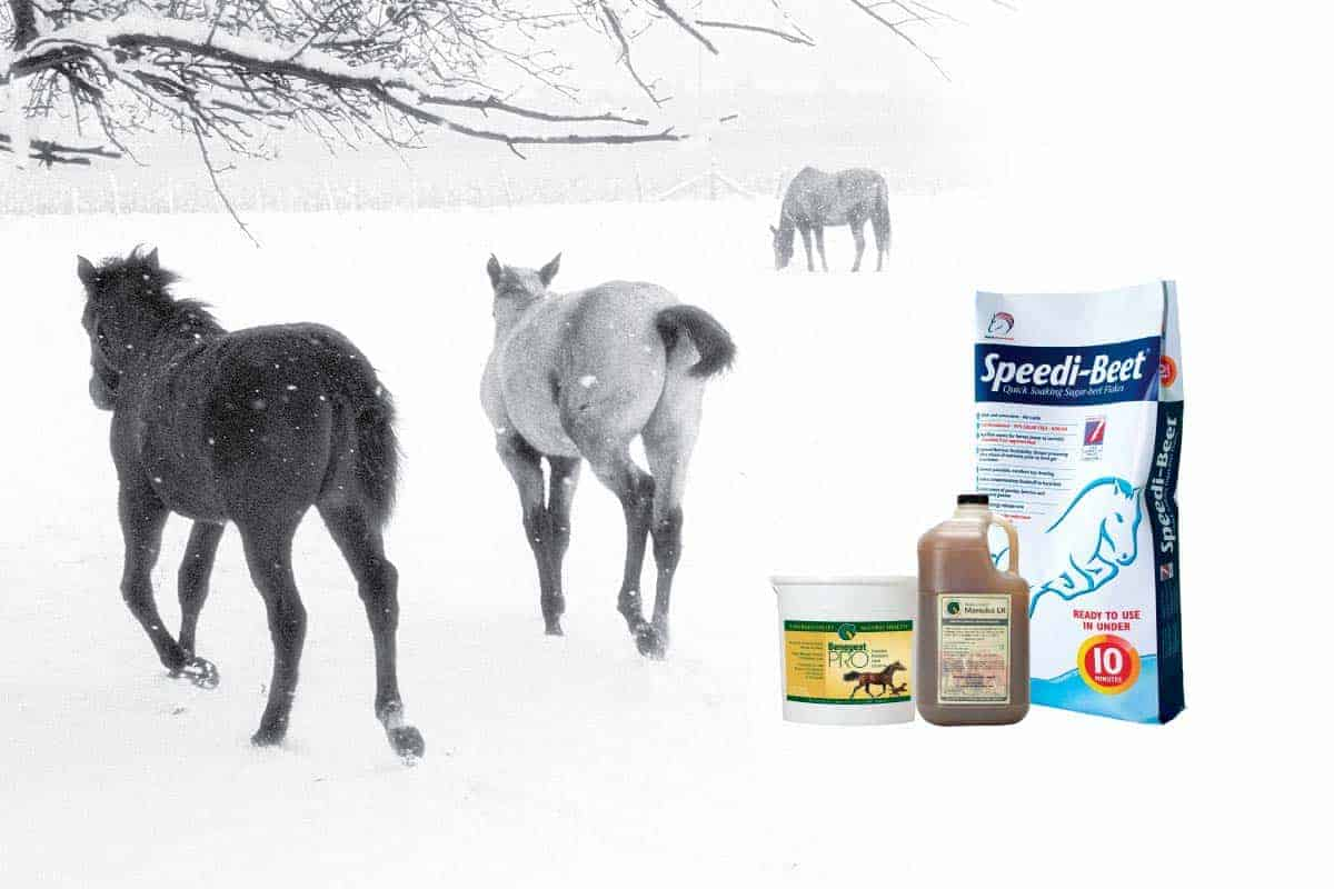 Healthy Gut, Happy Horses